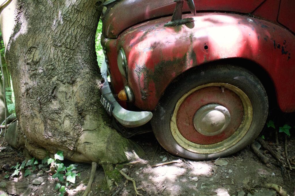 Was war zuerst? Ist der Baum ums Auto gewachsen?