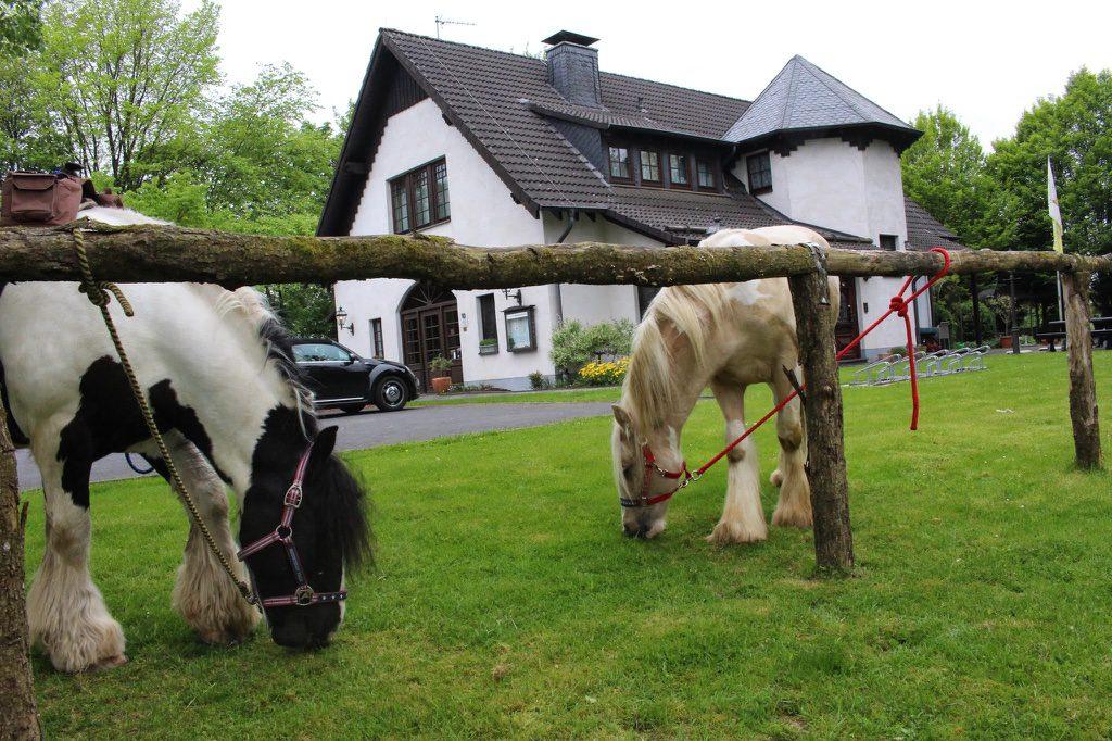 Auch Pferde sind im Ballebäuschen herzlich Willommen