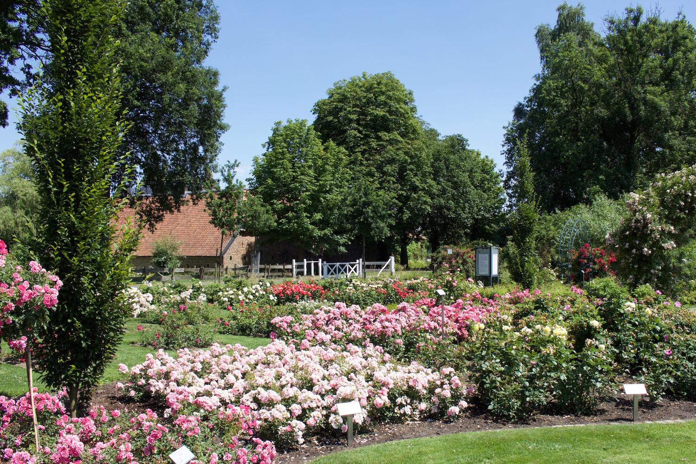Rosendorf Lottum Limburg Holland Niederlande