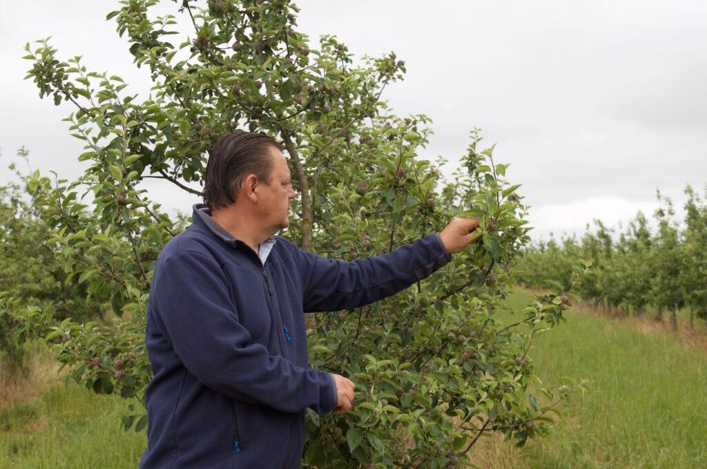 Normandie Frankreich Stéphane Van Tornhout ist Apfelbauer aus Leidenschaft Apfelplantage Cidre Apfelsaft