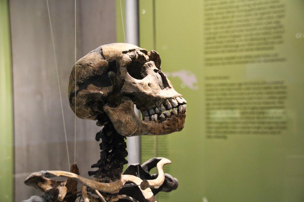 neandertahler, neandertal, neanderland, Neandertaler, Museum, Mettmann