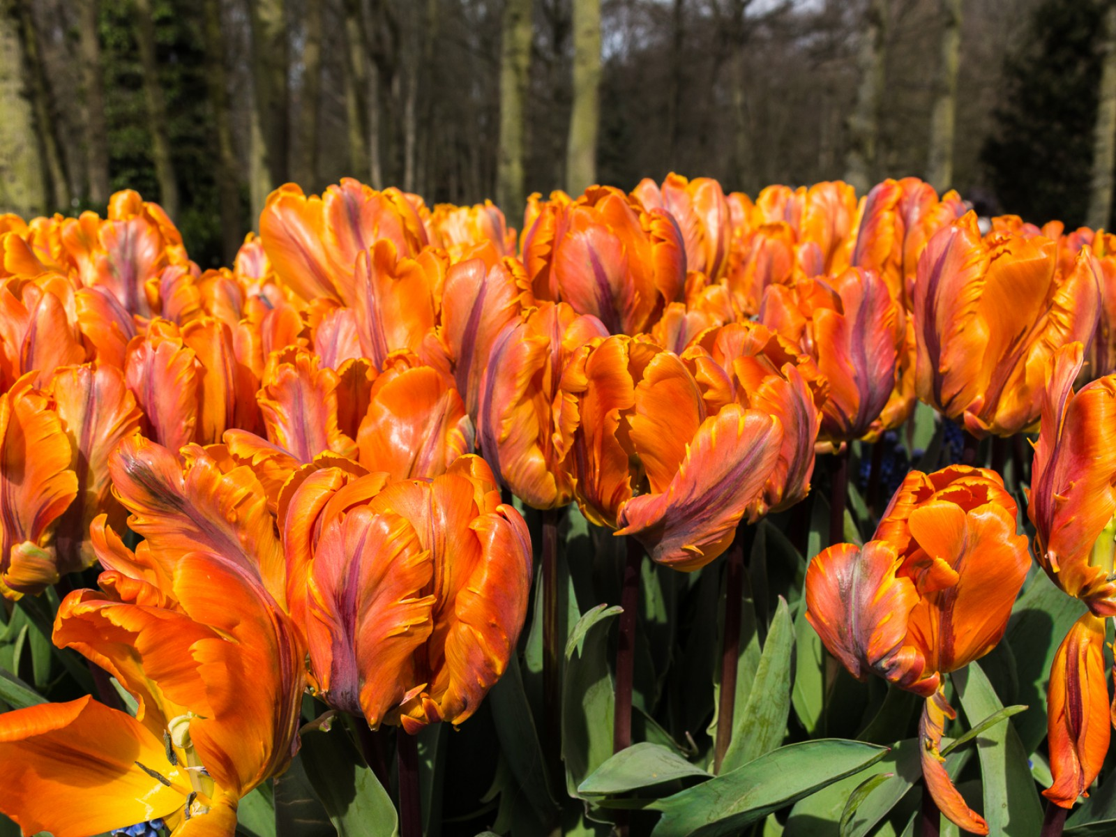 niederlande_noordwijk_keukenhof_reiseblog-2736