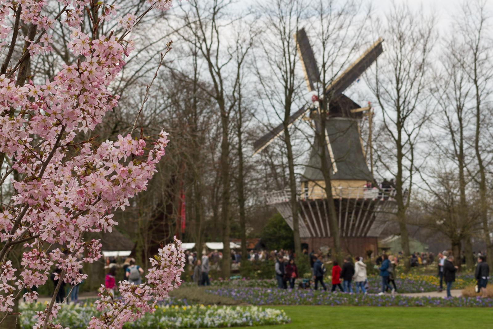 niederlande_noordwijk_keukenhof_reiseblog-2794