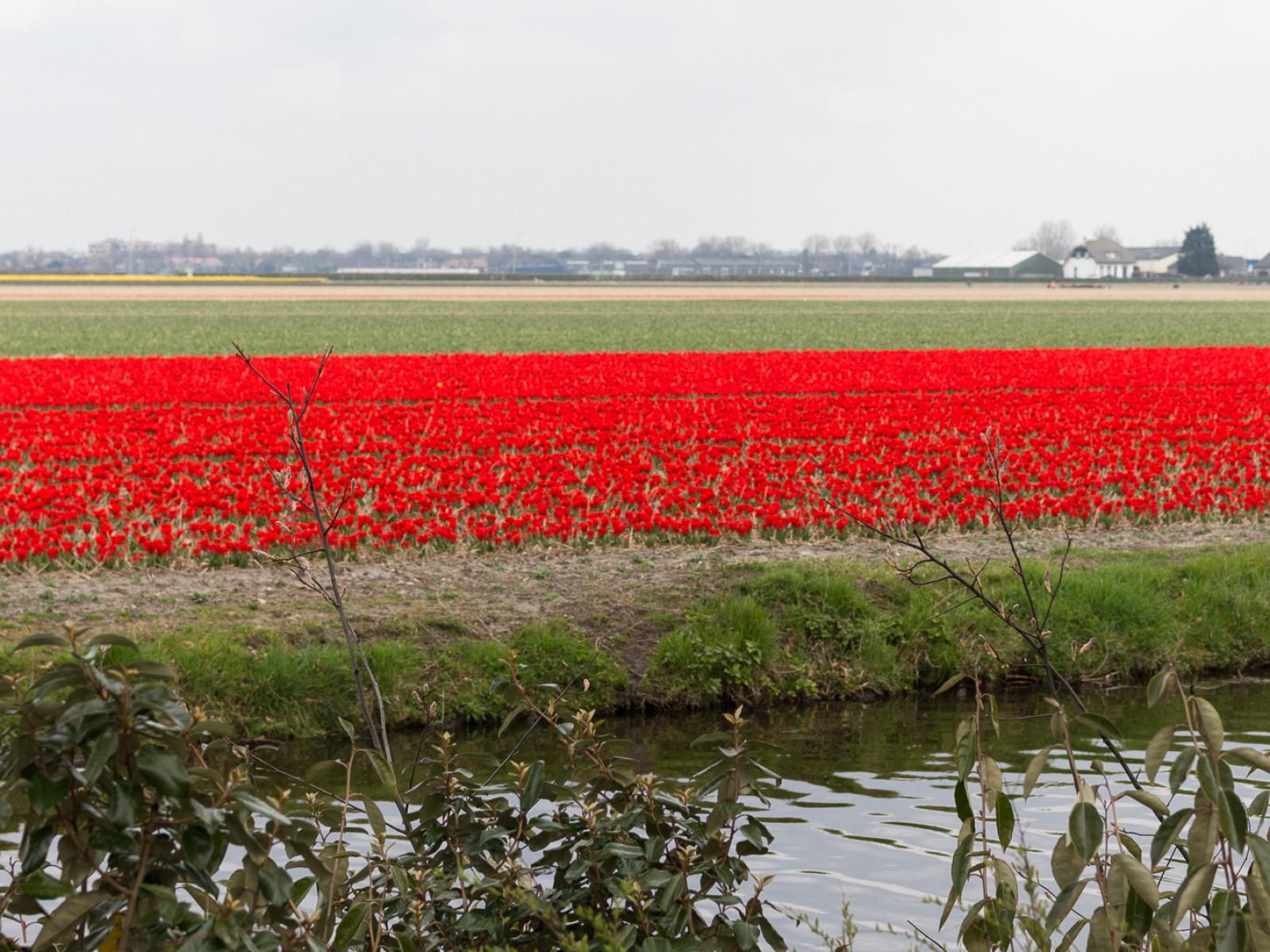 niederlande_noordwijk_keukenhof_reiseblog-2796