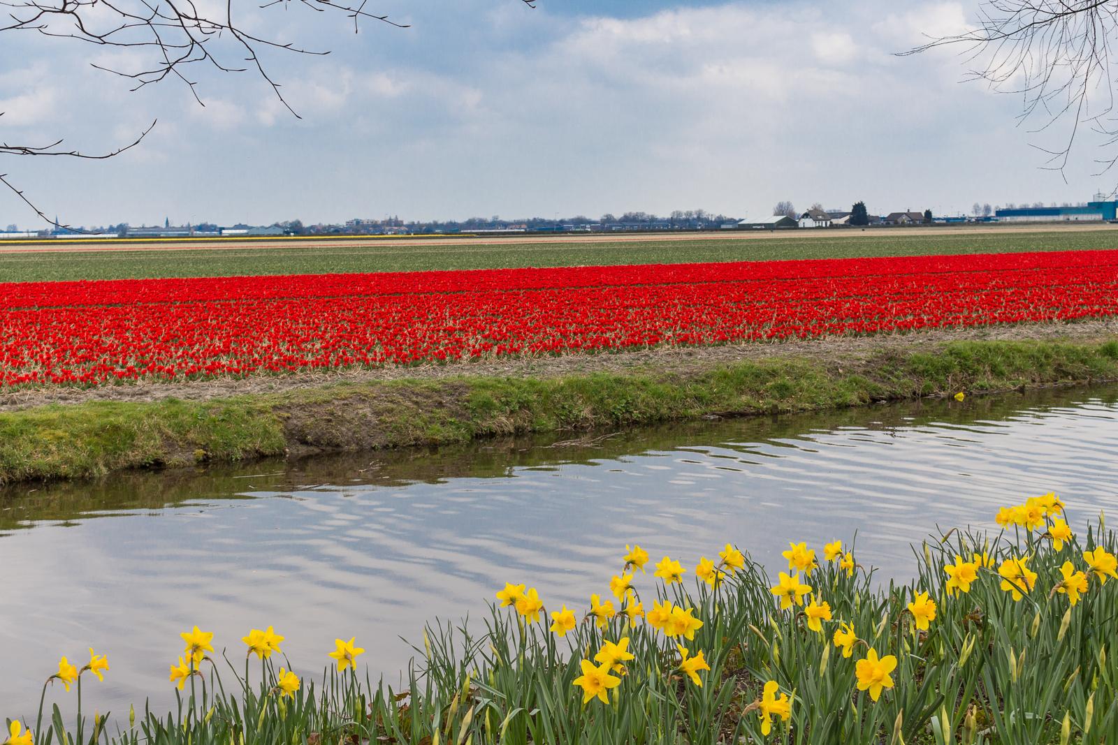 niederlande_noordwijk_keukenhof_reiseblog-2799