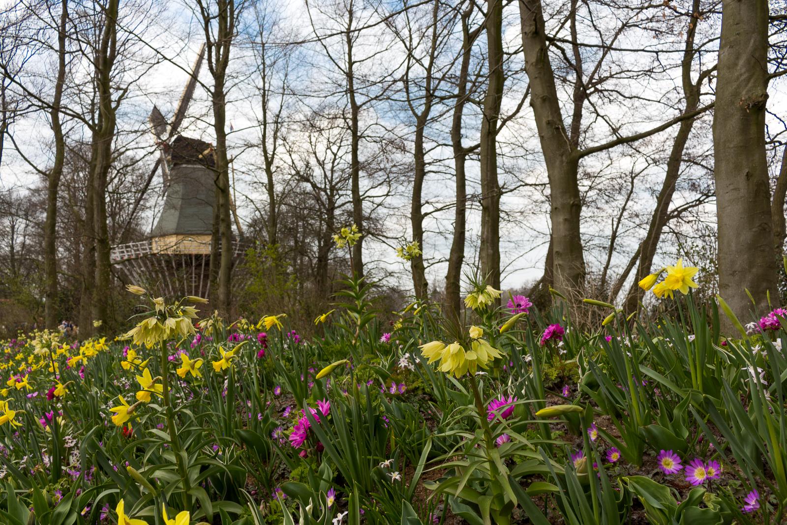 niederlande_noordwijk_keukenhof_reiseblog-2801