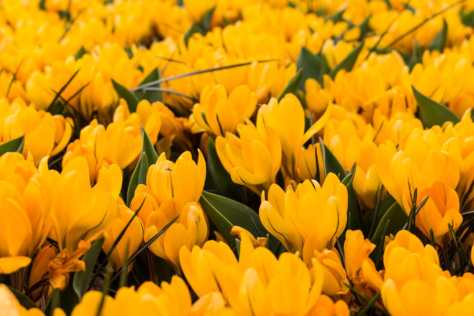 niederlande_noordwijk_keukenhof_reiseblog-2849