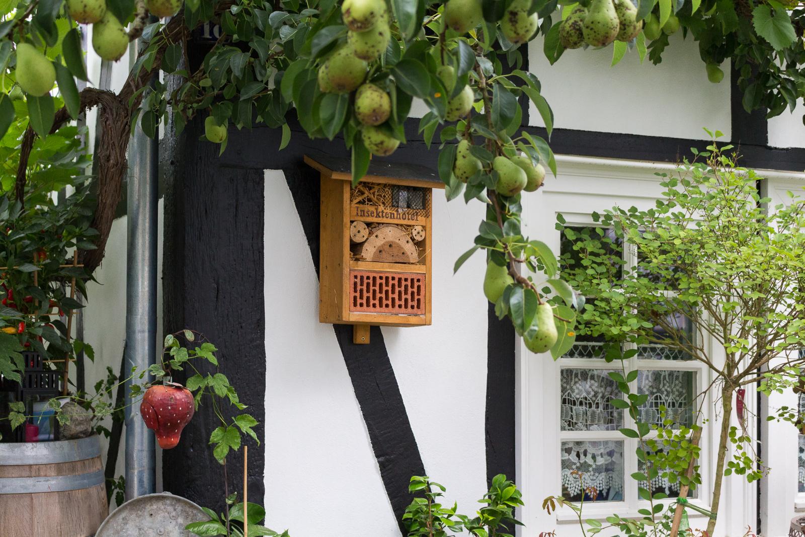 Siegerland, Freudenberg