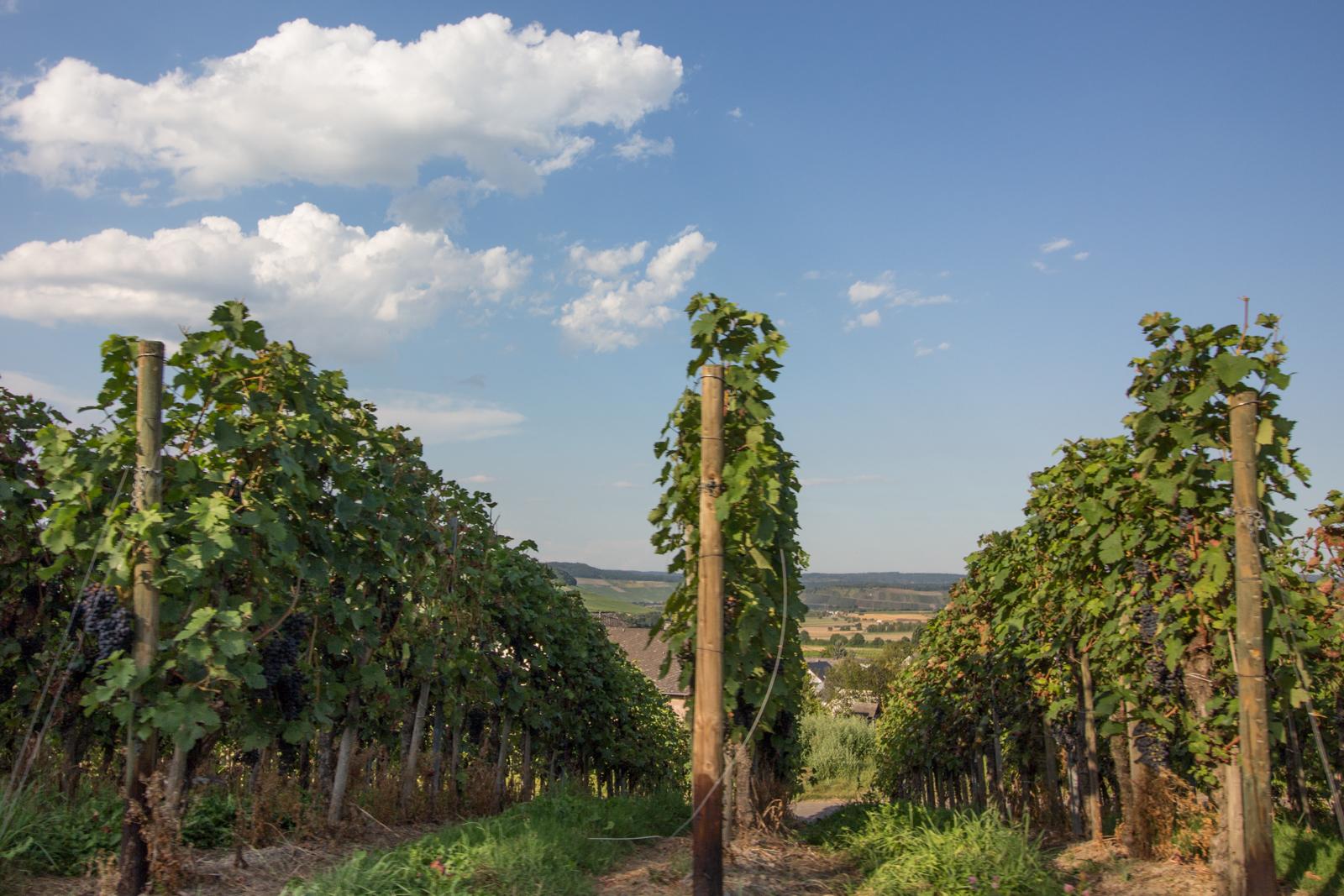 Wein, Mosel, Cabrio, Moseltour, Cabriotour an der Mosel, Weingut Bastgen, Öko-Wein