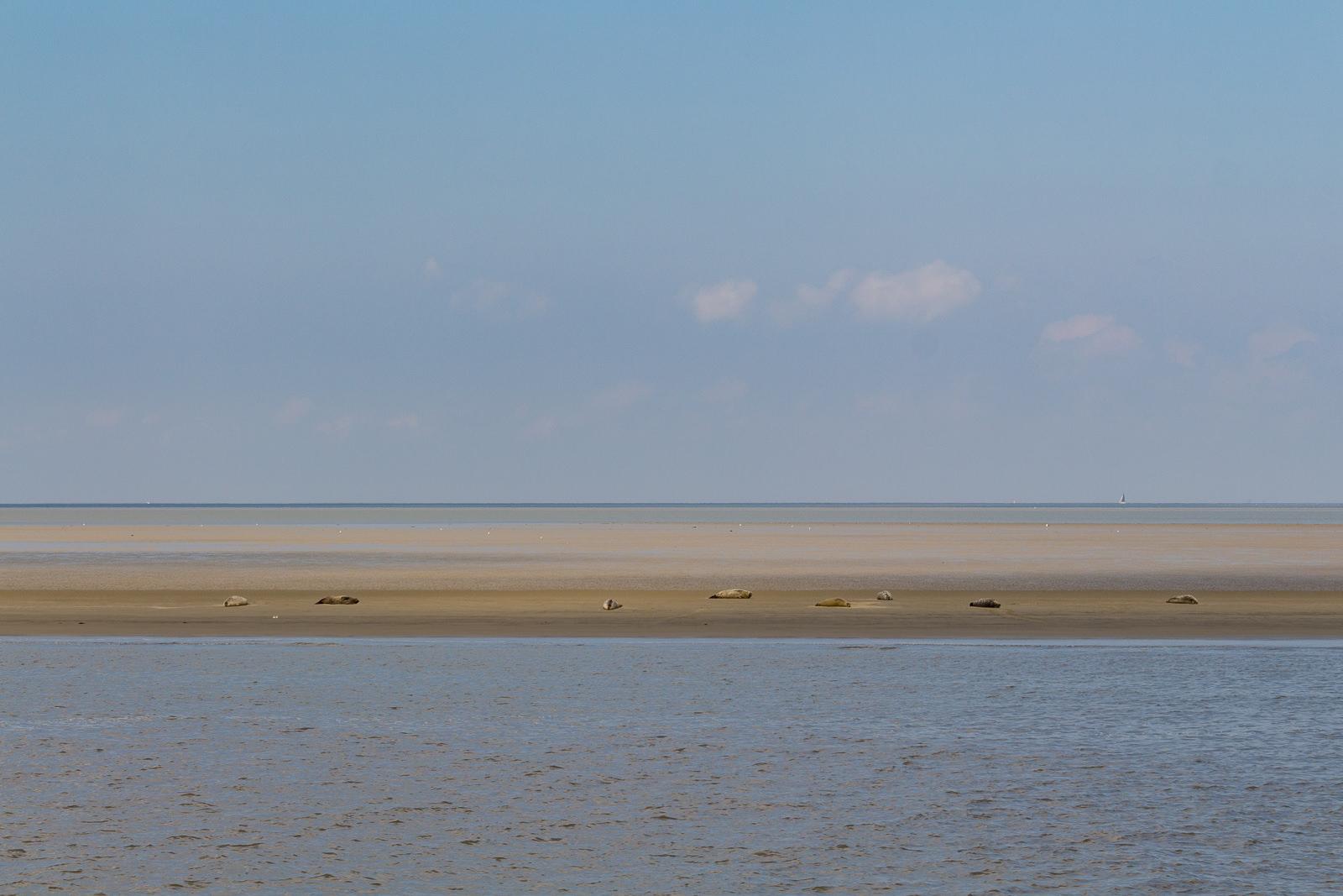 Seehunde, Cuxhaven, Wochenendreise, Hafen, Hafenrundfahrt, Schiffe, Boote