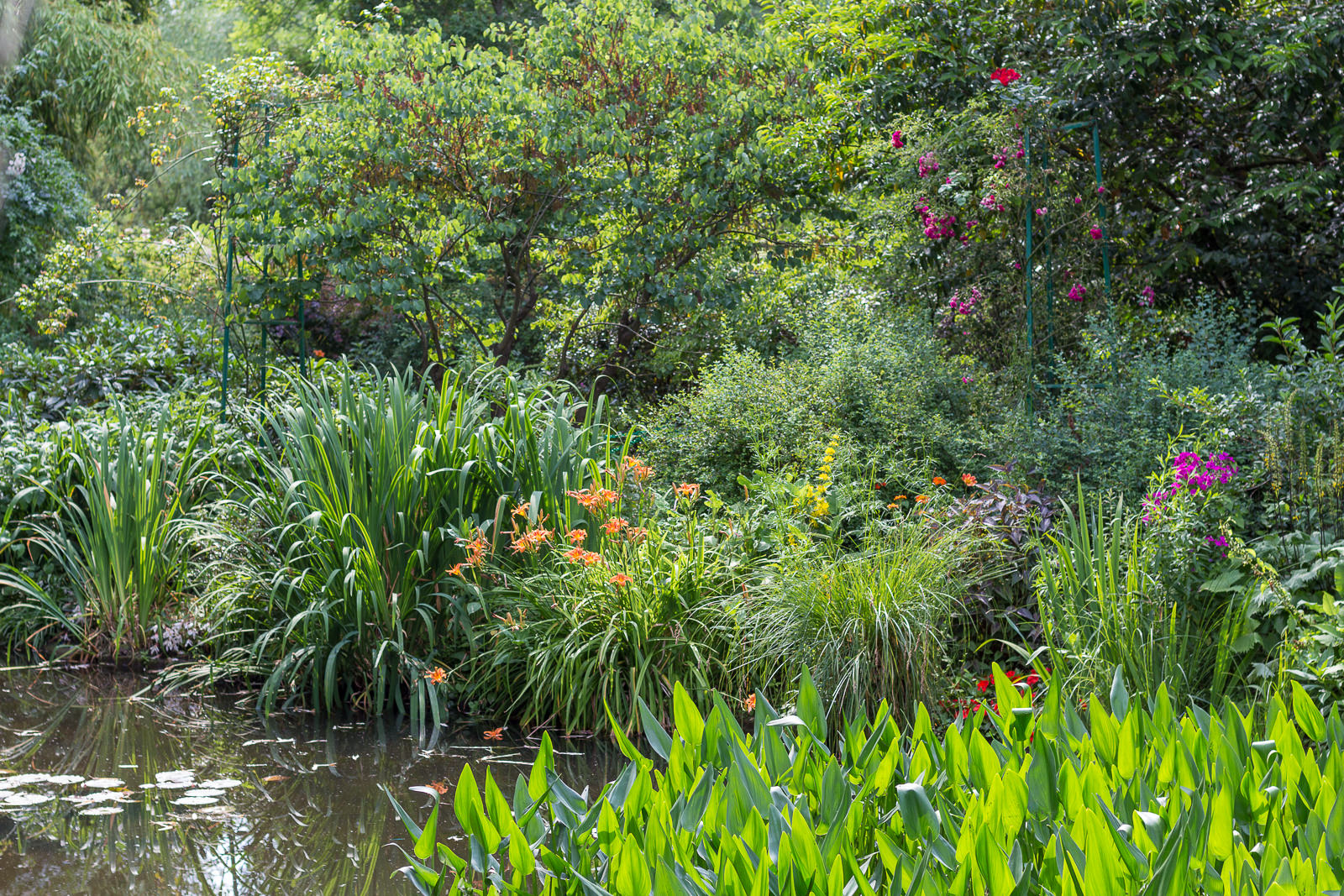 Normandie, Eure, Giverny, Garden Claude Monet