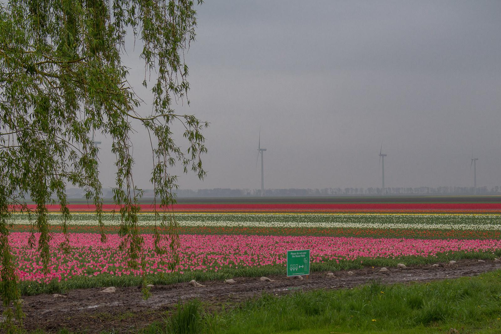 flevoland, cabriotour, roadtrip, tulpenroute