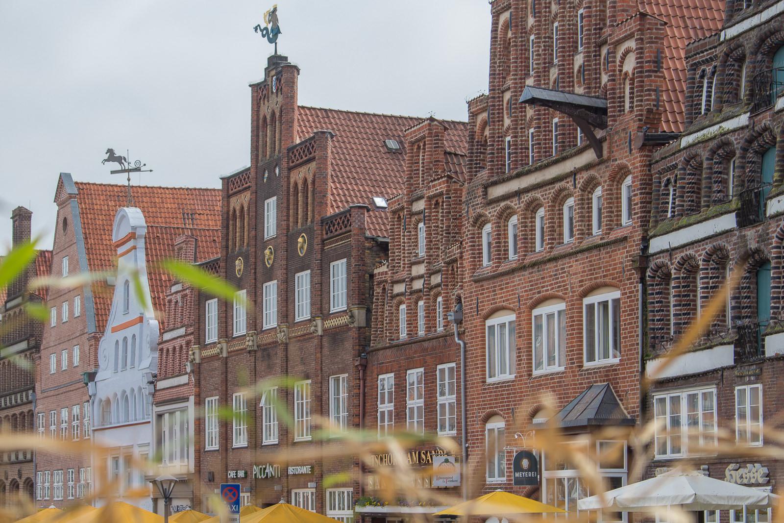 Lüneburger Heide, Tee, Lueneburg, Lüneburg