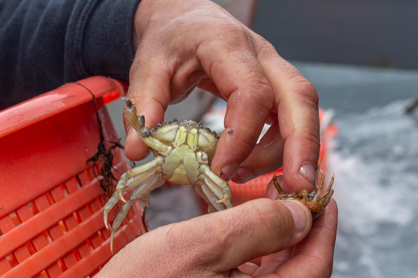 Krabbenkutter, Texel, TX20