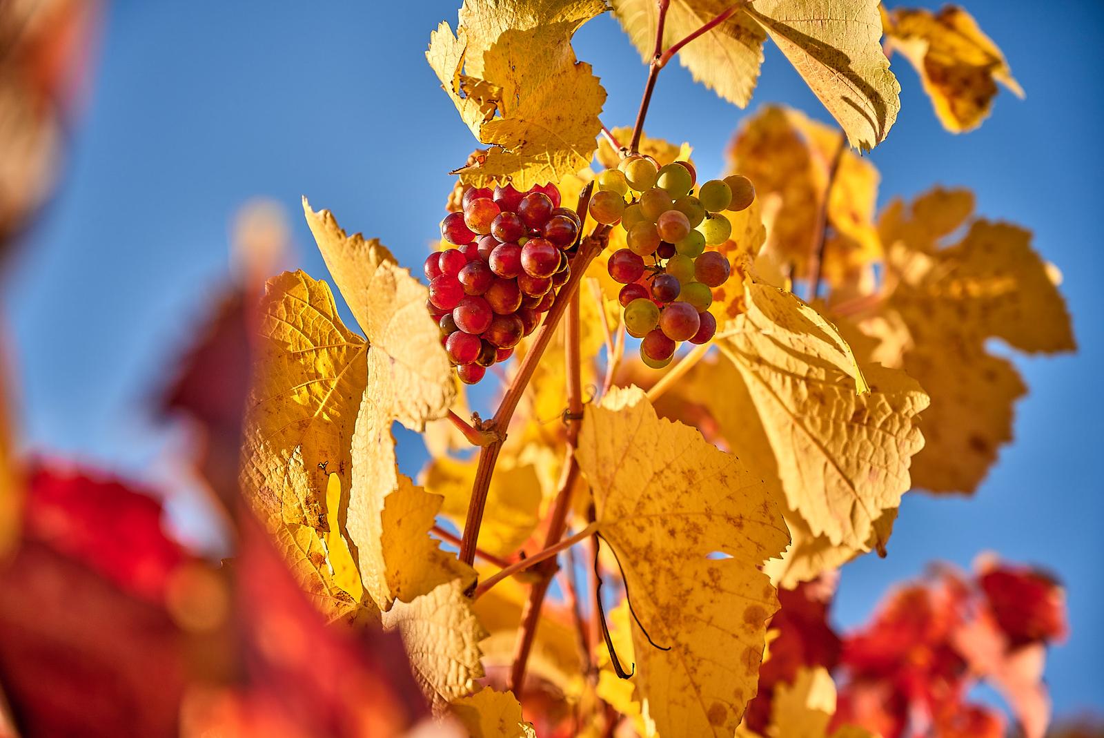 (Wein)Genuss hat viele schöne Ansichten Foto: © Achim Meurer www.achimmeurer.com