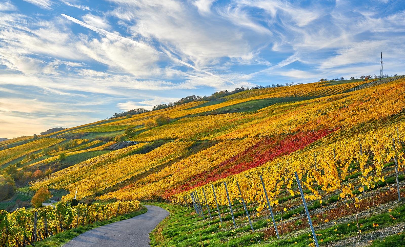 Oberes Mittelrheintal beim Weinbergschlösschen Foto: © Achim Meurer www.achimmeurer.com